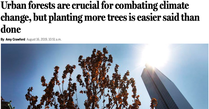 The Boston Globe: Urban forests are crucial for combating climate change, but planting more trees is easier said than done