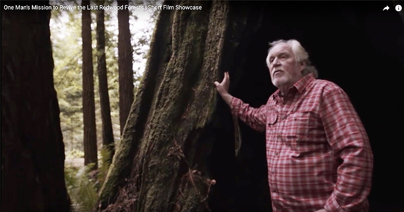 National Geographic: One Man's Mission to Revive the Last Redwood Forests | Short Film Showcase