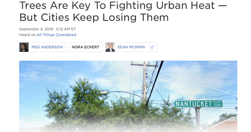 NPR: Trees Are Key To Fighting Urban Heat — But Cities Keep Losing Them